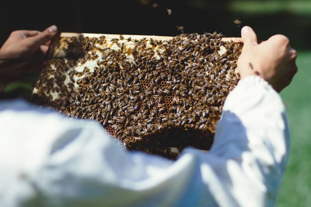 mein honig 2