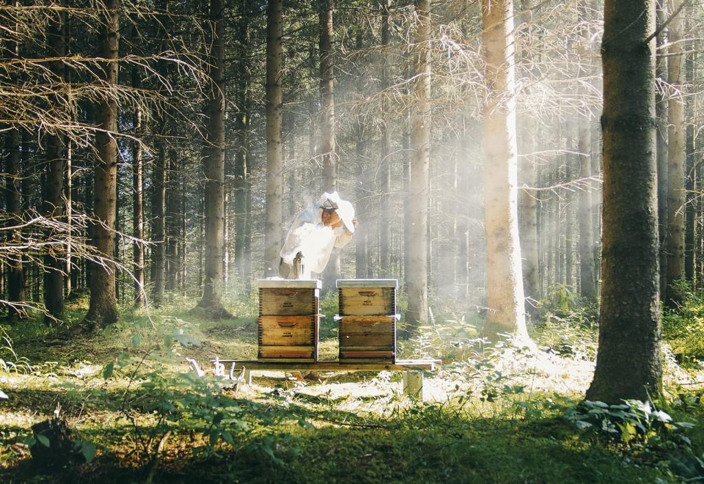 mein honig 4